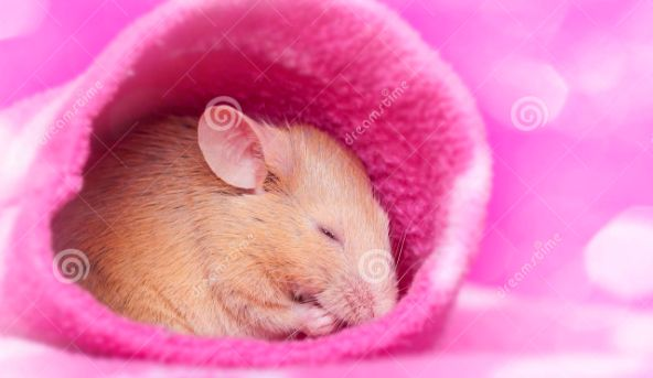 source of image: https://thumbs.dreamstime.com/z/cute-little-mouse-sleeping-33226420.jpg