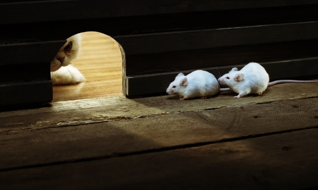 source of image: http://wallpaperpixel.com/thumbnail/55/11/two-mice-in-danger-of-a-cat-preview.jpg